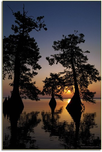 sunsets professionalphotographer waterscapes 2470mm oldflorida baldcypresstrees floridaimages photoworkshops phototours bluecypresslake floridalakes phototourguide jmwnaturesimagescom