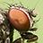 the Bugs macro group icon