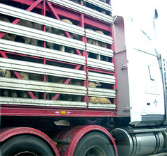 stop live animal exports