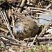 Tern Egg