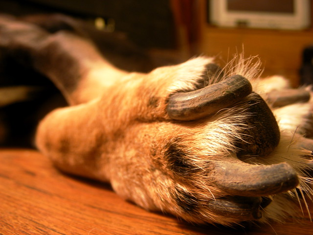 Paw and Nails