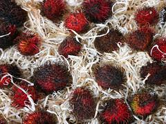 pattern(0.0), flower(0.0), plant(0.0), produce(0.0), crochet(0.0), art(1.0), rambutan(1.0), red(1.0),