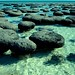 Stromatolites, Shark Bay