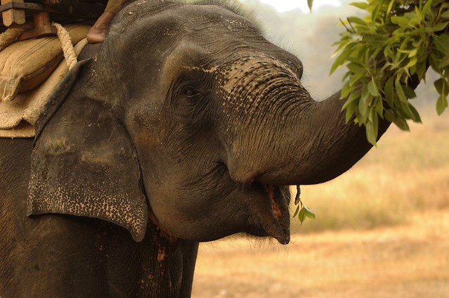 Smiling elephant | he was hungry :) | By: Honza Soukup ...