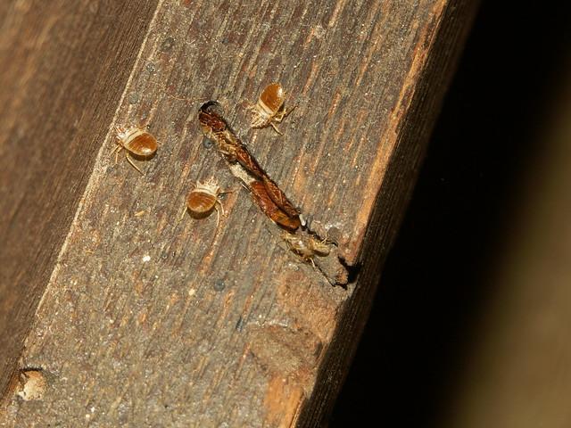 Bed Bug Infestations Uk