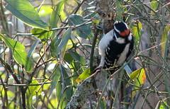 toucan(0.0), animal(1.0), branch(1.0), fauna(1.0), woodpecker(1.0), coraciiformes(1.0), beak(1.0), bird(1.0), wildlife(1.0),