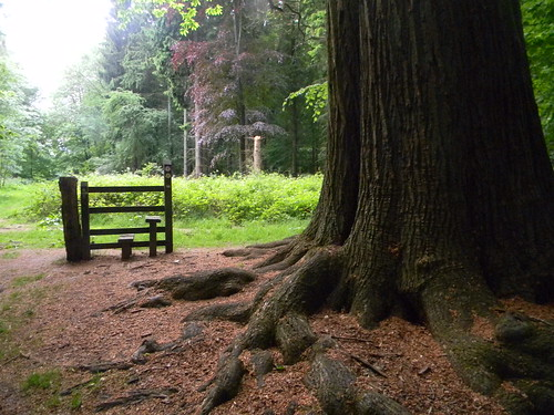 Tree and stile