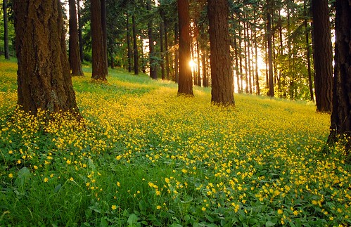 trees green yellow oregon forest portland wildflowers mttaborpark