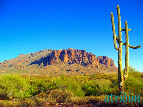 arizona cactus mountains cacti photo flickr desert apachetrail saguarocactus superstitionwilderness superstitionmountain tontonationalforest atridim
