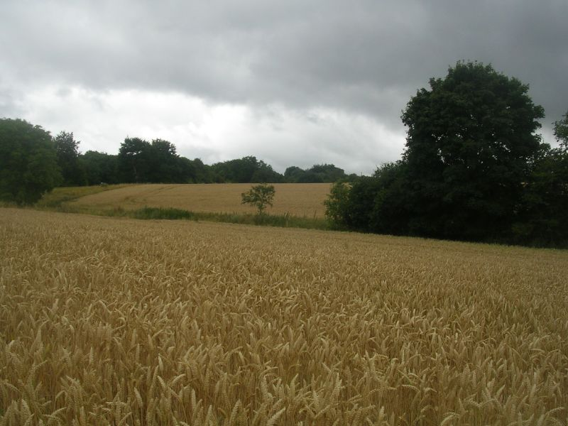 Wheatfield Effingham Junction to Westhumble