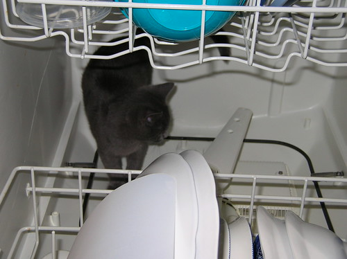 in the dishwasher
