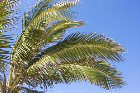 waving palm branches image search results