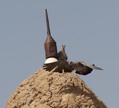 Minaret @ Dyingerey Ber Mosque