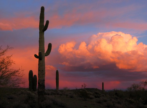 pink blue winter light sunset arizona cactus sky orange storm southwest color nature yellow clouds outdoors december glow purple desert awesome explore glorious saguaro brilliant naturesfinest maricopacounty blueribbonwinner supershot topshots anawesomeshot canonpowershota720is worldwidelandscapes natureselegantshots absolutelystunningscapes zoniedude1 colorsinourworld panoramafotográfico thebestofmimamorsgroups
