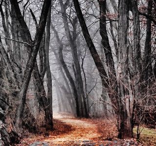 Dark Trail | by Scott Hudson *