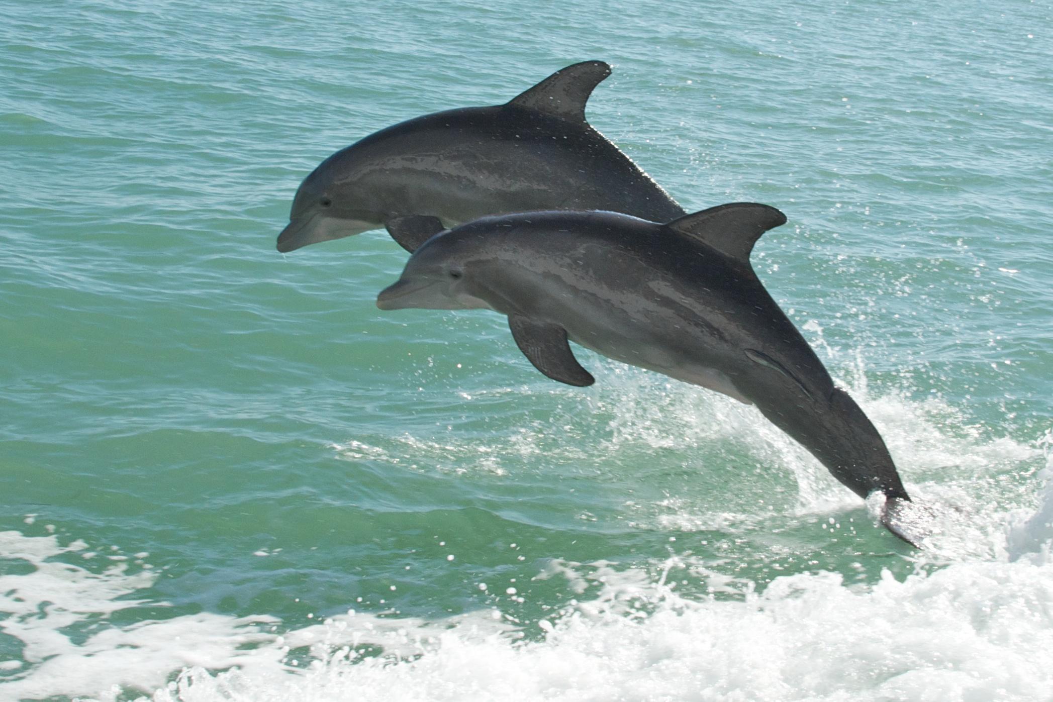 Pine Island Beach Florida Amoeba
