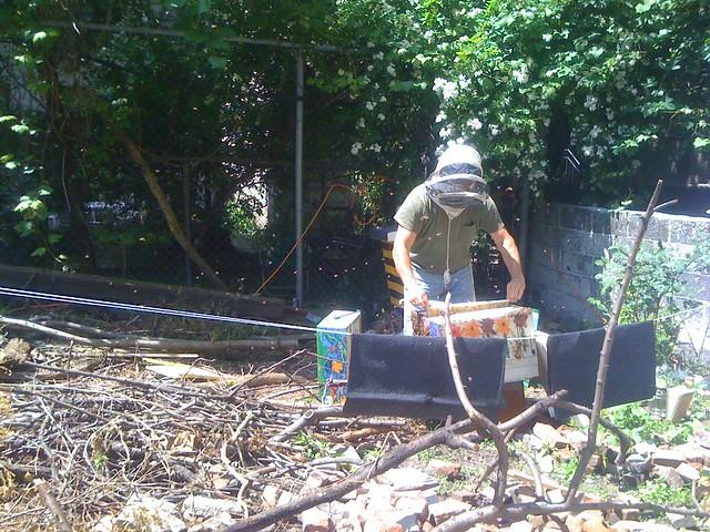 Beekeeping in Alphabet City | Flickr - Photo Sharing!