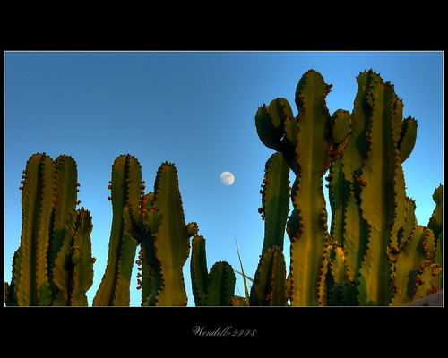 Moon Over Cactus
