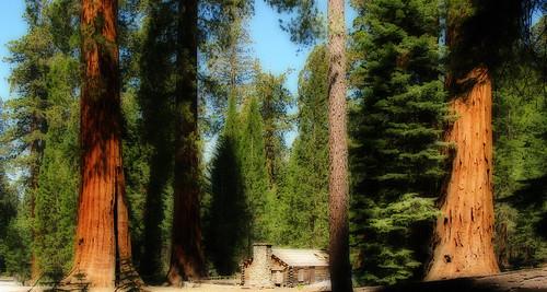 california ca trees usa museum canon landscape yosemite yosemitenationalpark landschaft bäume sequoia orton giantsequoias canonpowershot mariposagrove mammutbaum wawona v1000 g9 yosemitenp f2549 impressedbeauty theunforgettablepictures mariposagrovemuseum canonpowershotg9 anadelmann