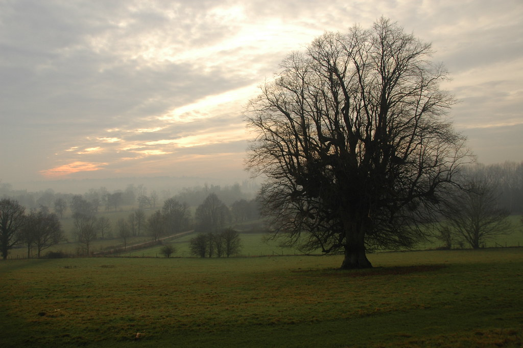 Hever to Leigh Taken in mid winter - trees in the mist near Penshurst