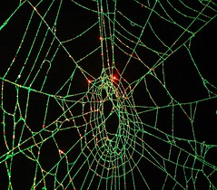 Spider and Spider Web Project 589