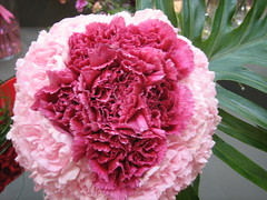 carnation, flower arranging, flower, floral design, plant, produce, flower bouquet, floristry, pink, petal,
