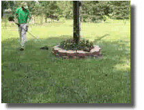 Lawn Care Weedeating