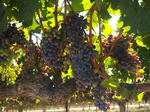 Wine Tasting _120