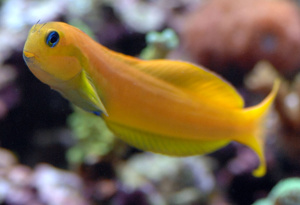for Best reef safe fish
