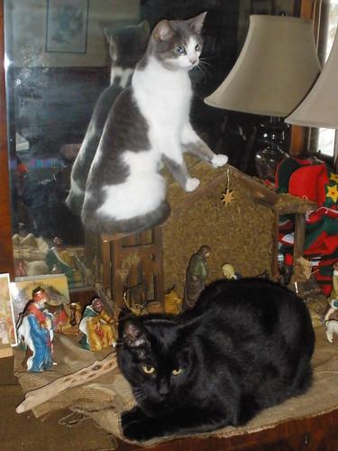 Meenie and Shadow on Nativity Scene