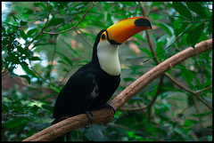 animal(1.0), hornbill(1.0), rainforest(1.0), branch(1.0), toucan(1.0), nature(1.0), fauna(1.0), jungle(1.0), beak(1.0), bird(1.0), wildlife(1.0),