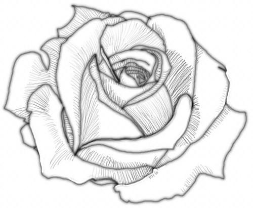 Tuto Faire Rose En Filtre A Caf Ef Bf Bd