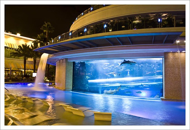 Las vegas swimming pool flickr photo sharing - Las vegas swimming pools ...