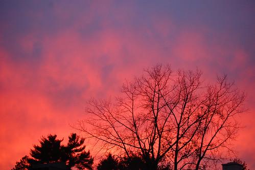 sunset sky tree ct avon