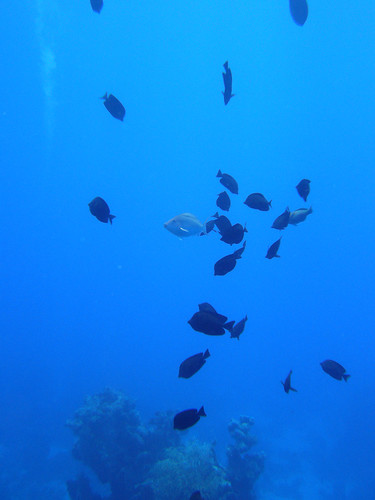 Fish on Claudia reef