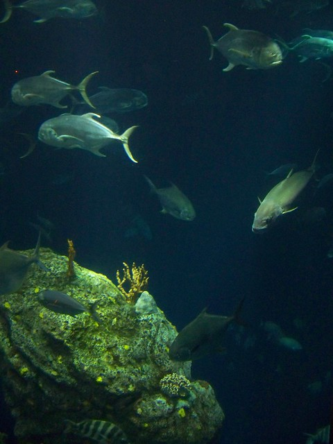Visit To The South Carolina Aquarium Charleston South Ca