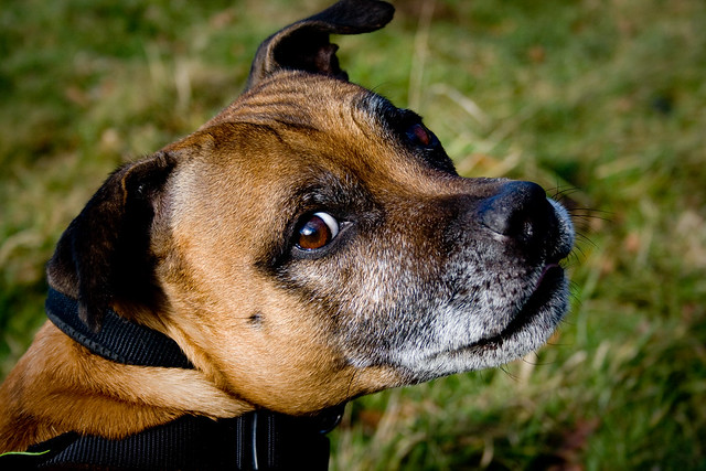 Alfie Dog Walking Reviews