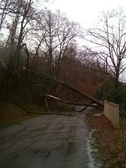 Jan 24, 2009 - Wind Damage Outside Thil - Photo of Thil