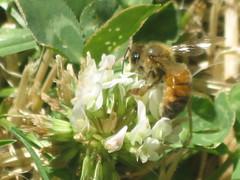 28Jan09 ~ Bee