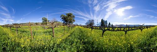 panorama landscape vineyard 360 napa mustard hdr highdynamicrange vr equirectangular sdosremedios ©stevendosremedios size1x3