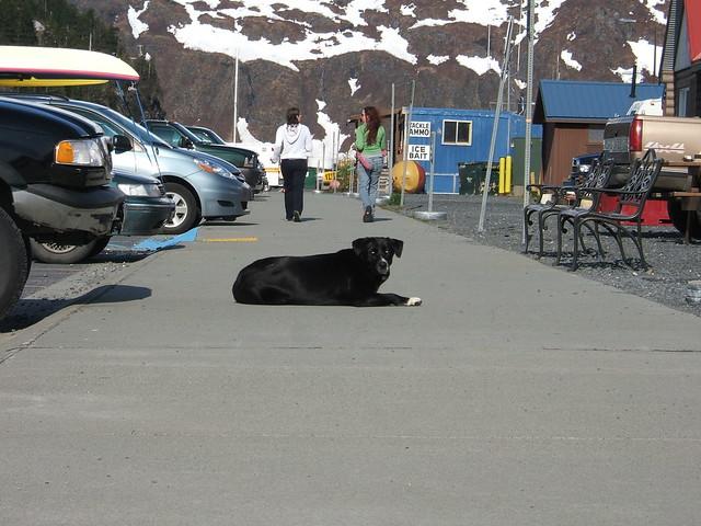 Whittier dog