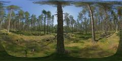 Aviemore: Pine Wood 1 Speybank Kincraig Scotland Equirectangular