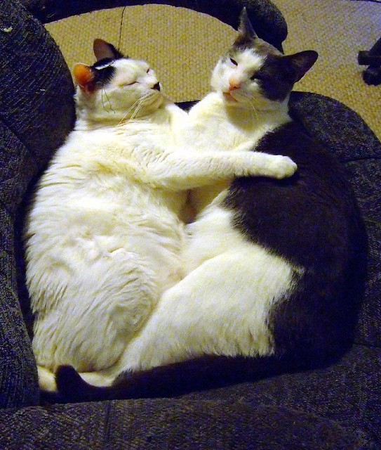 huggy boys
