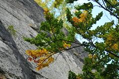 Blätter vor Felsen