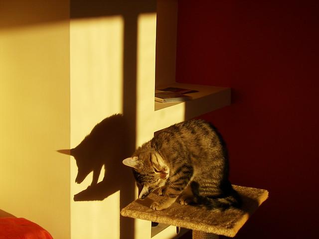 Pichi e la sua ombra: gatto o maiale?- Pitchi and her shadow: cat or pig?