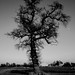 edited version, creepy tree