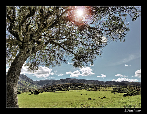 españa andalucía spain árbol cádiz acebuche parquenaturaldelosalcornocales campodegibraltar losbarrios