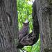 IMG_2631b by Naturecamhd