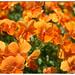 110514 flowers01
