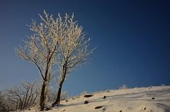 Trees on West Tianmu Mountain